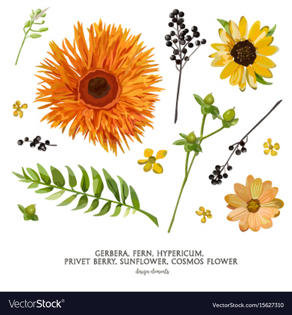 Flower elements set collection various flowers vector image