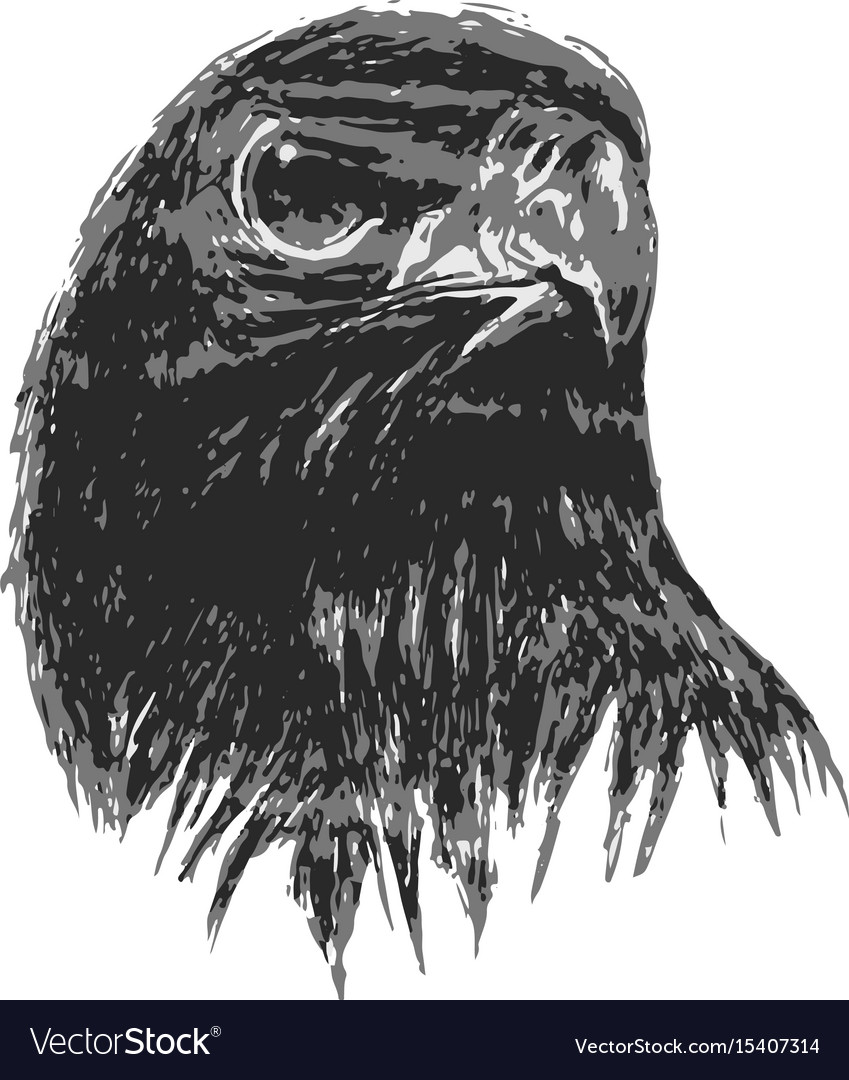 Eagle drawing in art vector image