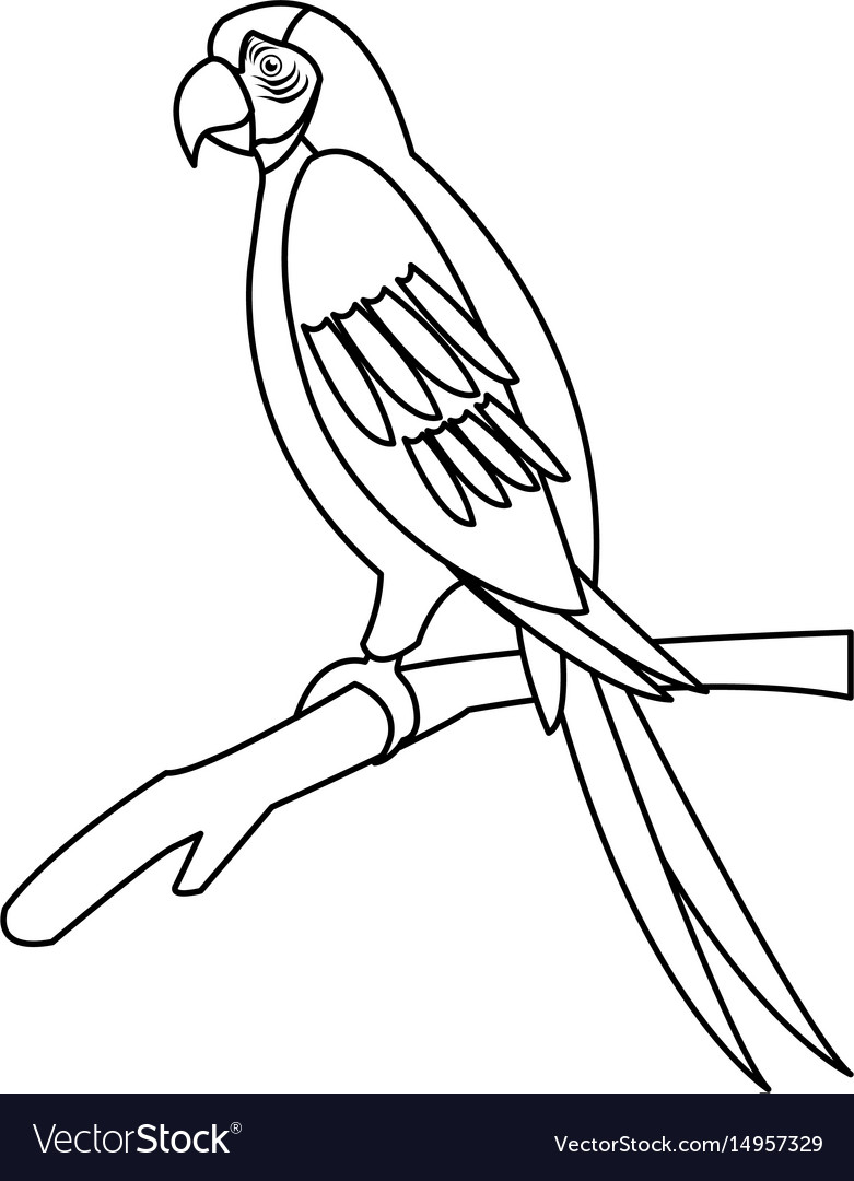 macaw parrot branch brazil bird wildlife outline vector image