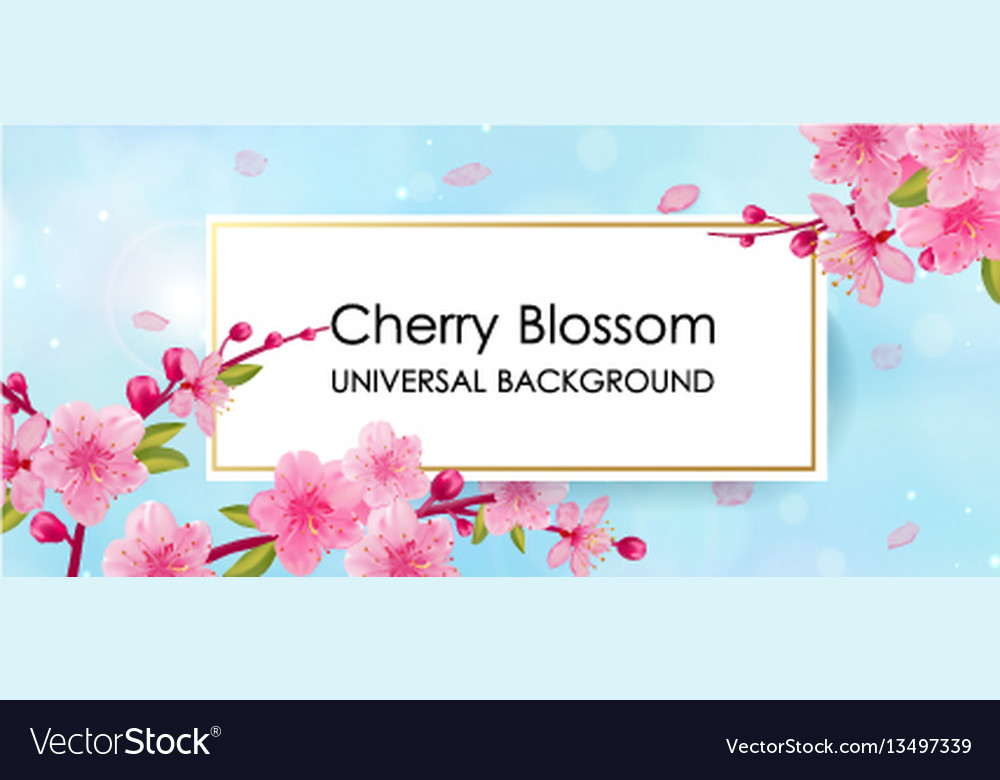 Branch of sakura with flowers and leaves vector image