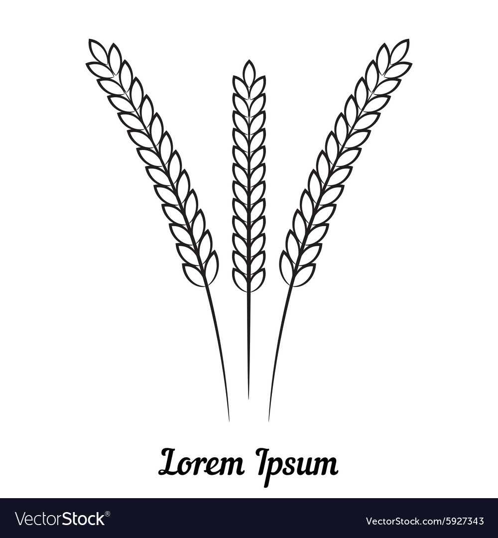Three wheat spikelet on white background vector image