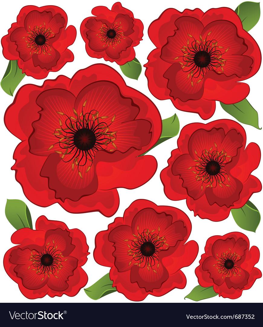 Poppies vector image