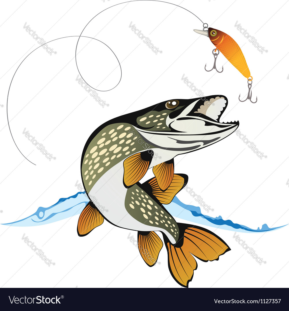 Pike and fishing lure vector image