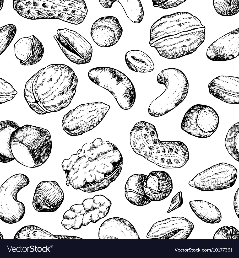 Seamless hand drawn nuts pattern vector image