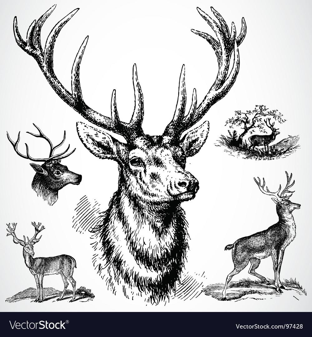 Deer ornaments Vector Image