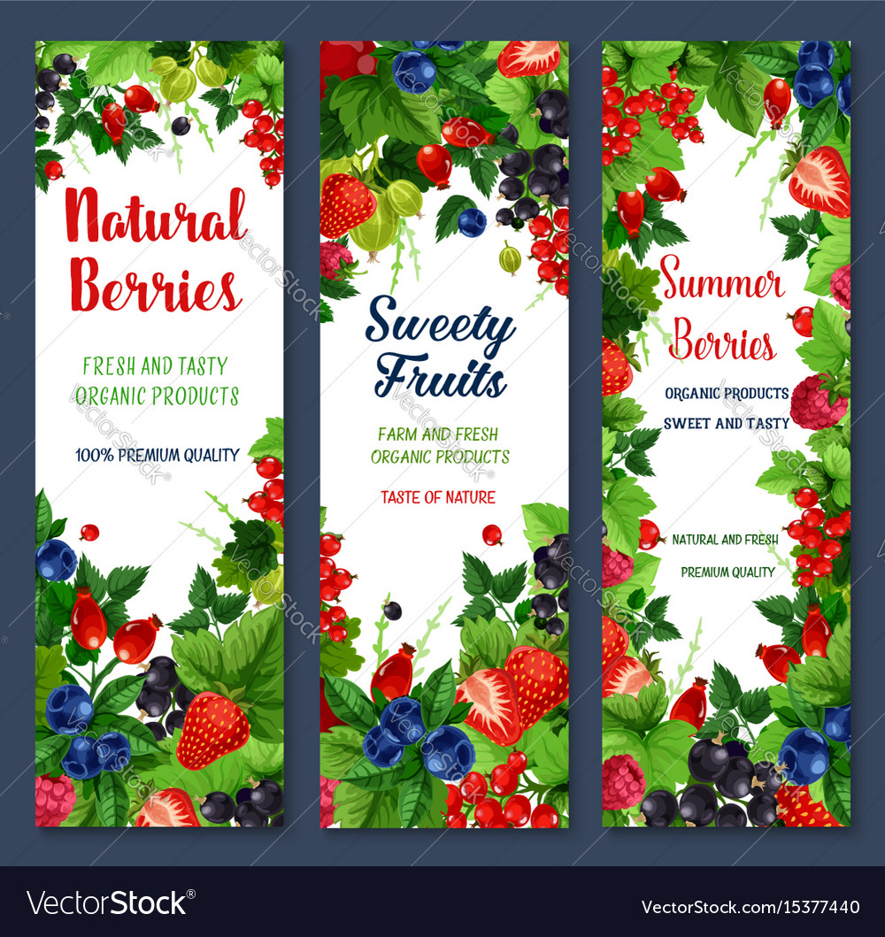 Berries and sweet fruits banners set vector image