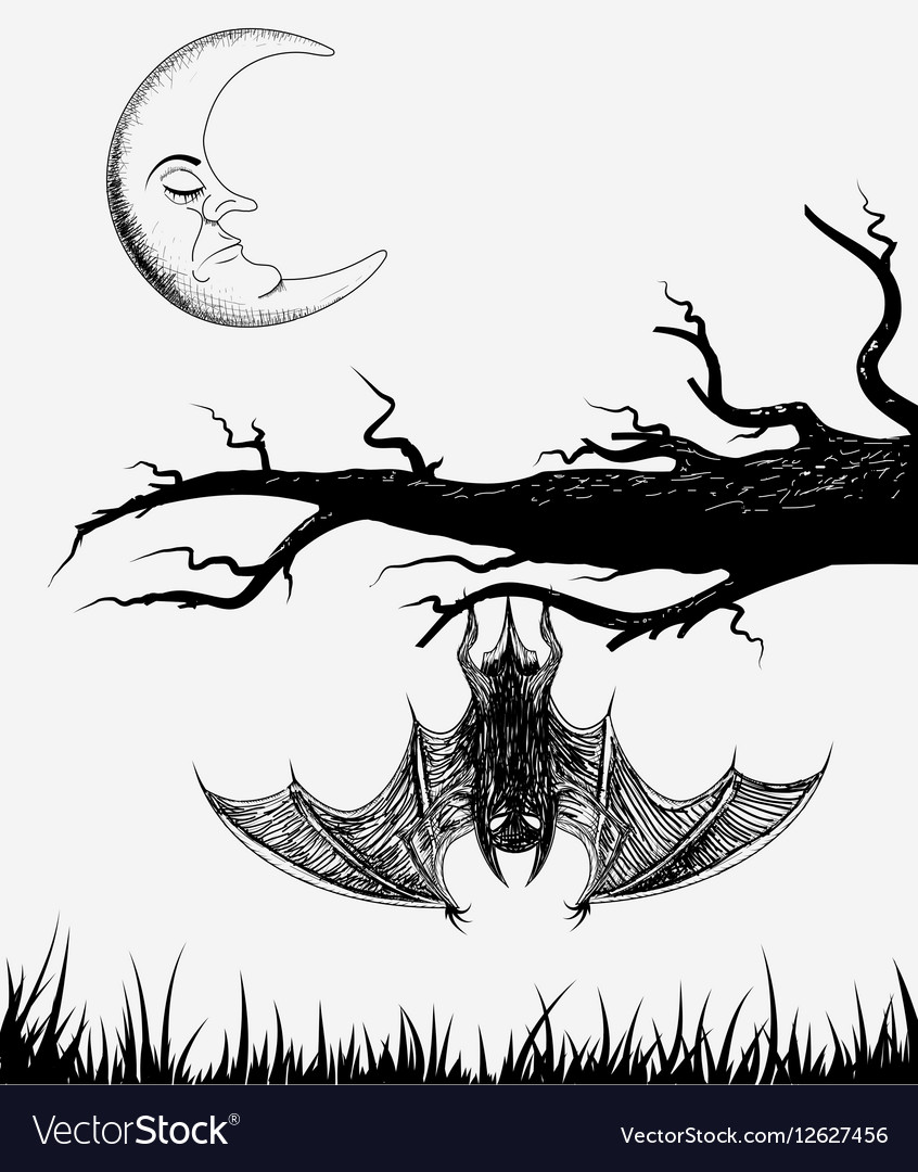 Bat is hanging on a branch vector image