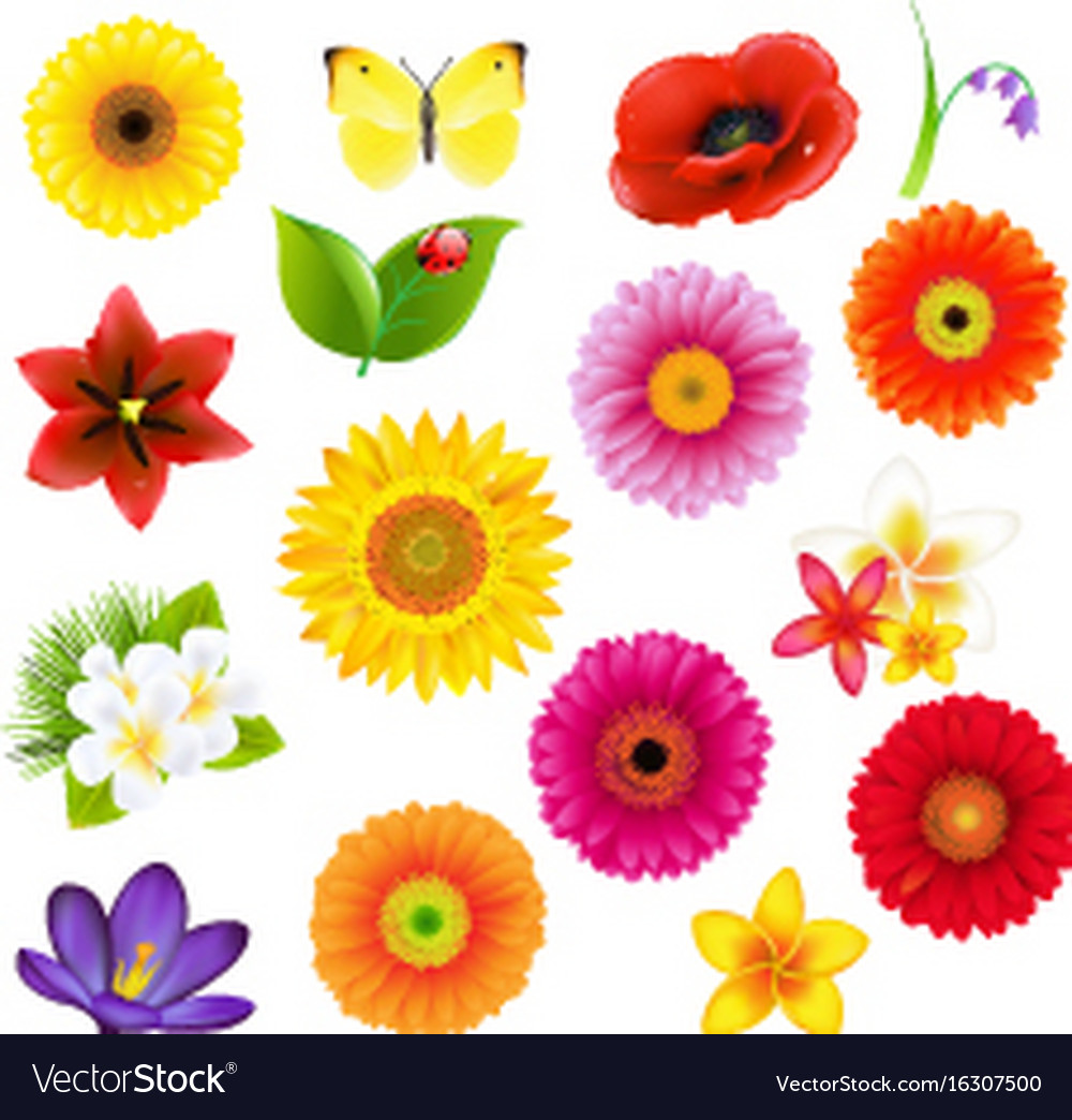 C lorful big flowers andleaf set with gradient vector image