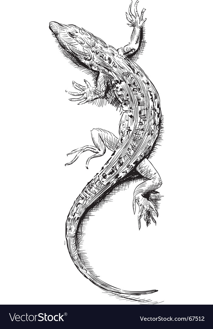 Lizard sketch vector image