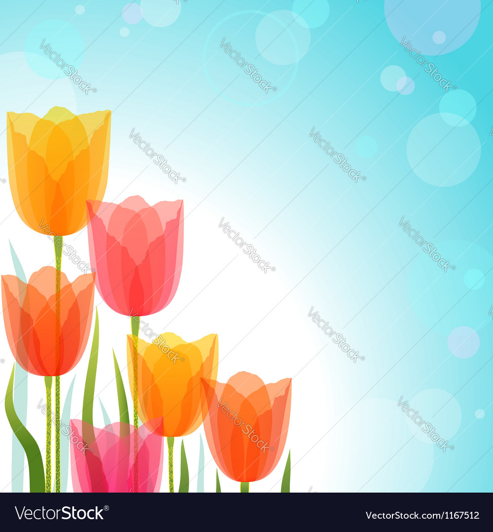 Tulip design vector image