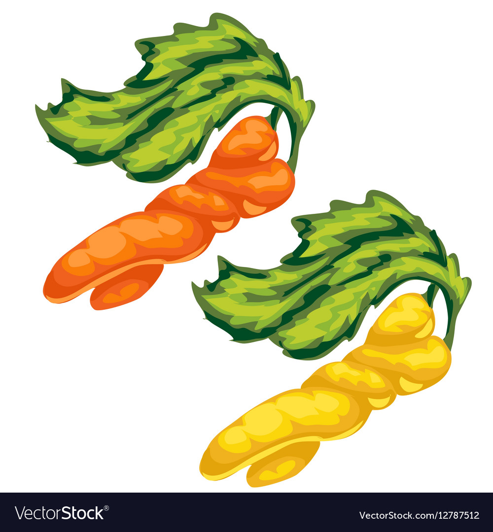 Yellow and orange swirled carrot vegetable vector image