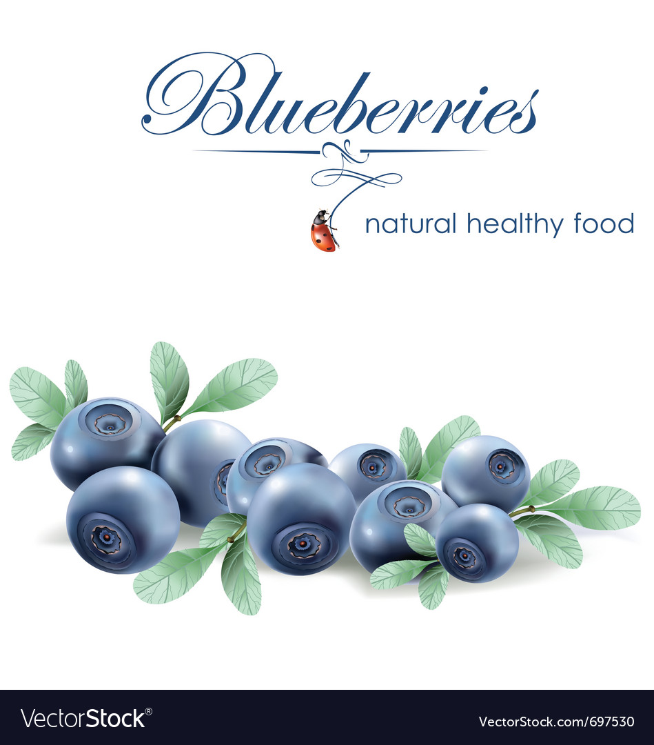 Blueberries vector image