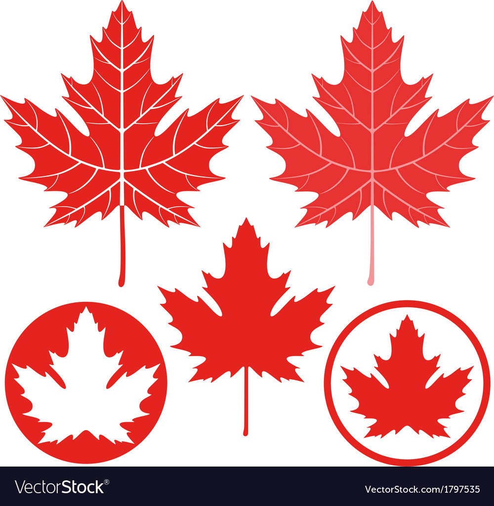 Maple leaf Royalty Free Vector Image - VectorStock
