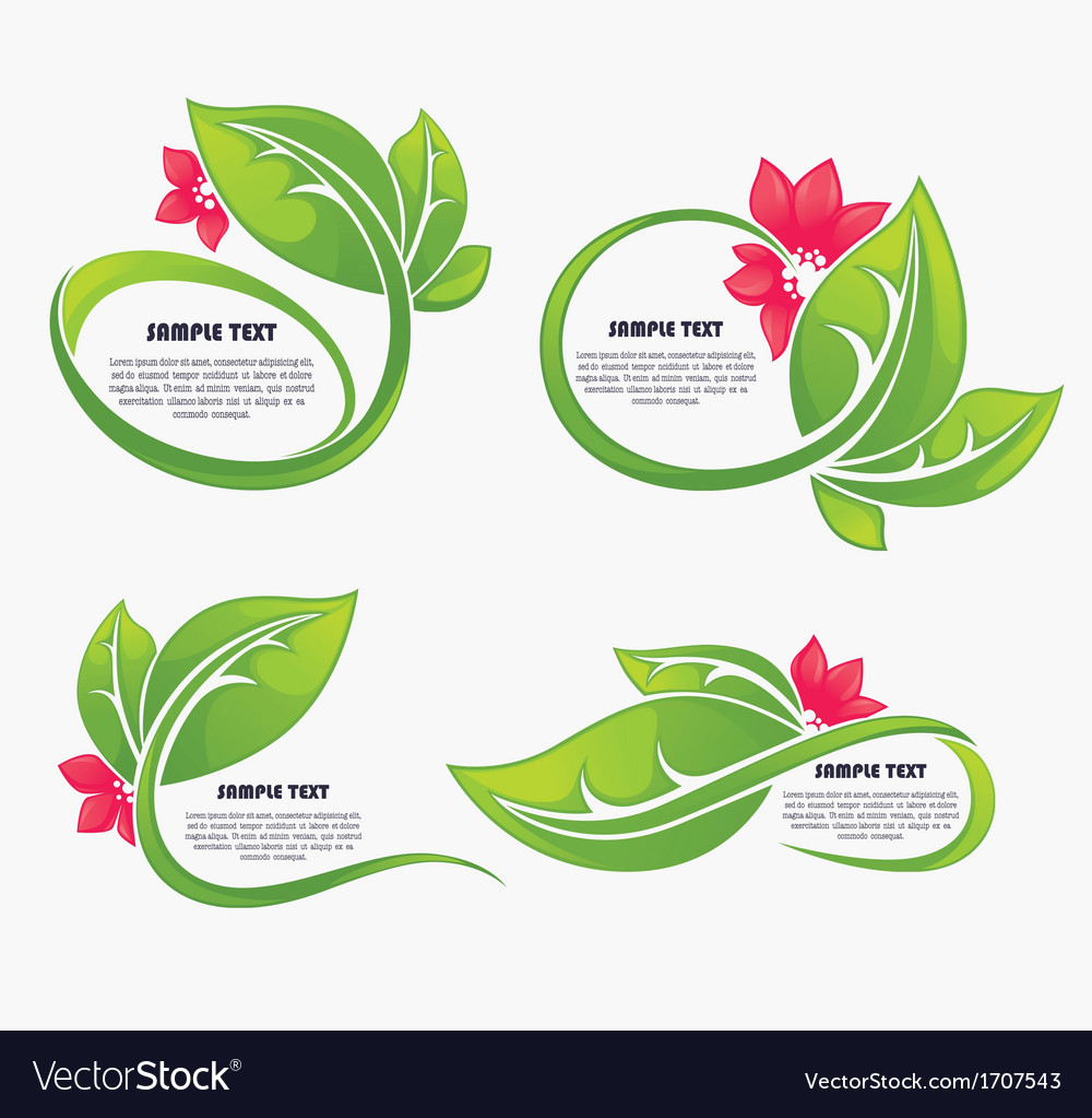 Leaves and flower vector image