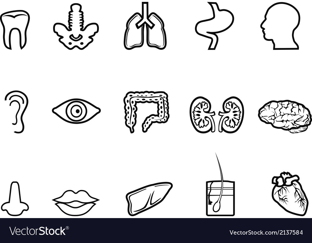 Black human anatomy outline icon vector image