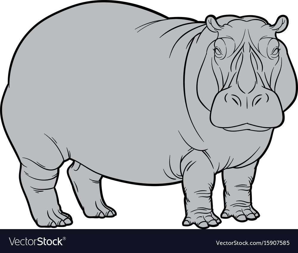 Hippo or hippopotamus vector image