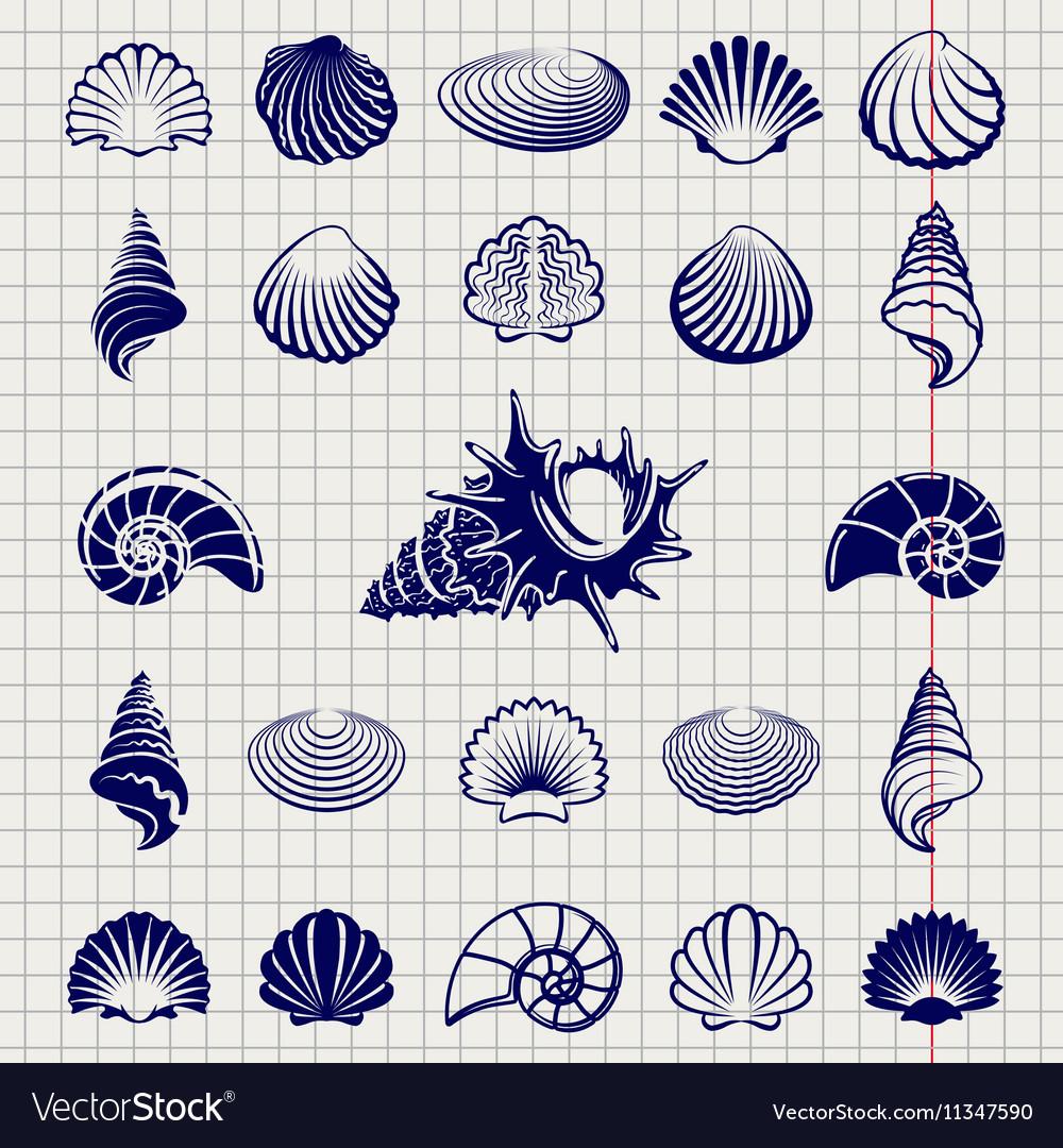 Sketch of sea shells vector image