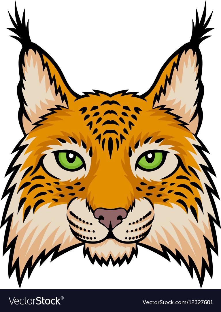 Lynx head vector image