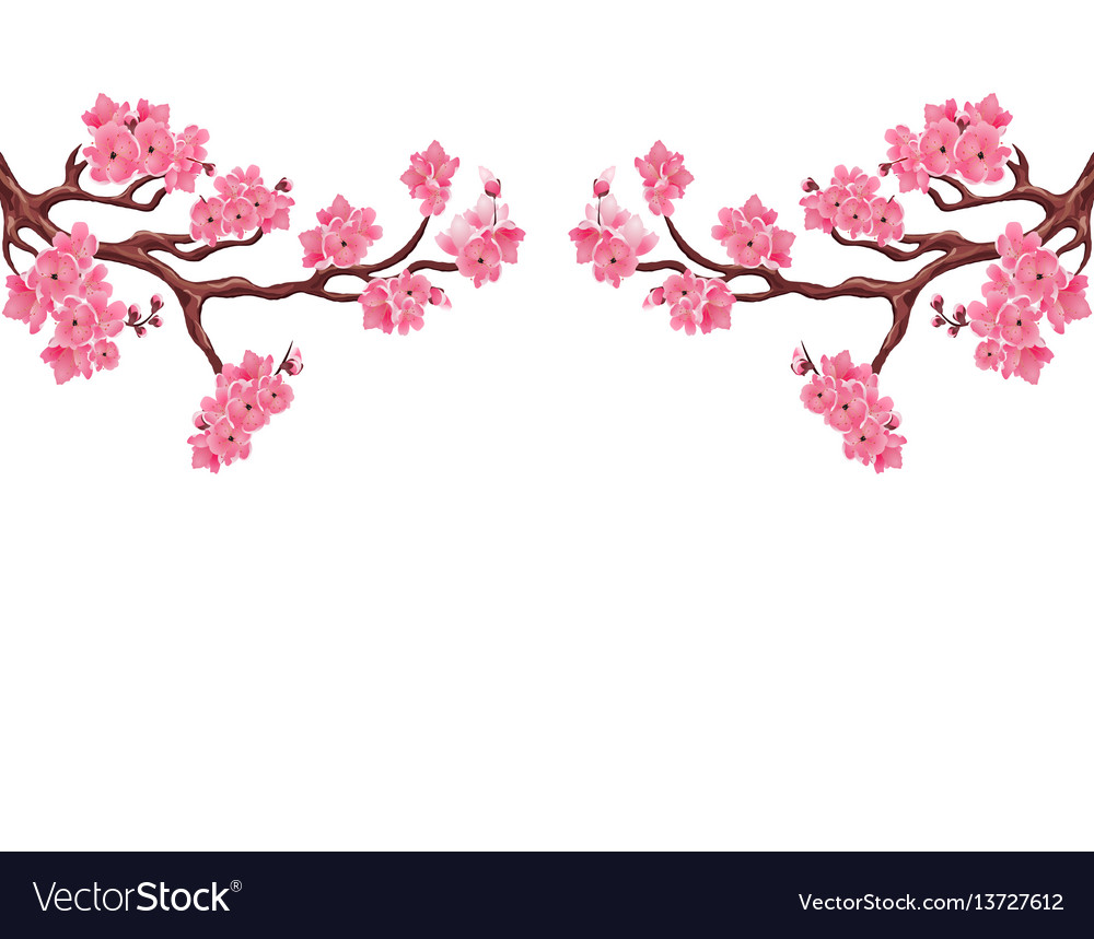 Two symmetrical branches with pink cherry blossoms vector image