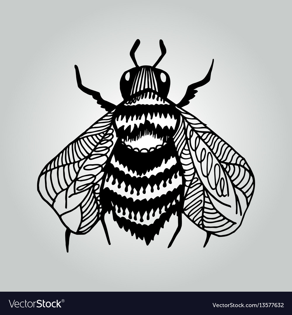 Abstract doodle bee wildlife collection vector image