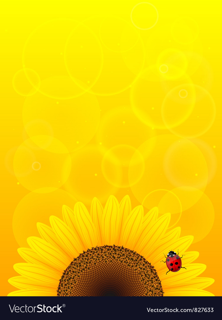 Sunflower and ladybird vector image