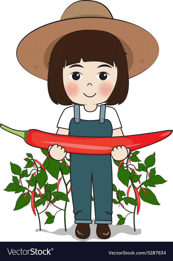 Planter and chilies vector image