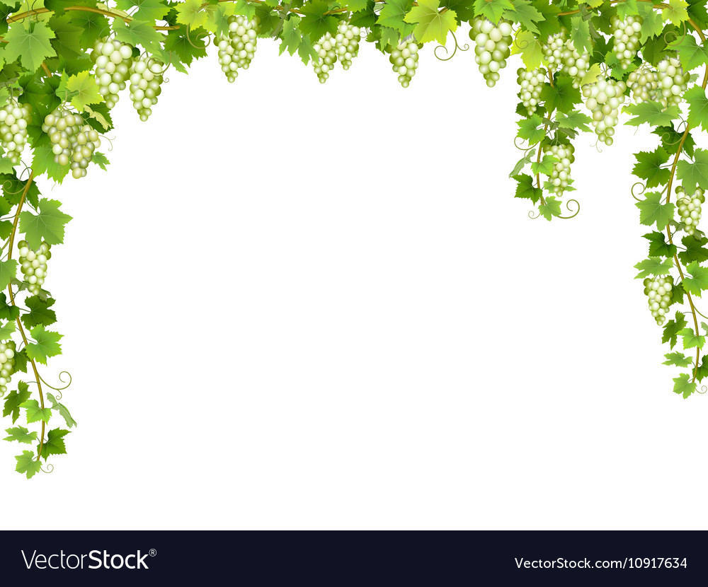 White grape floral frame vector image