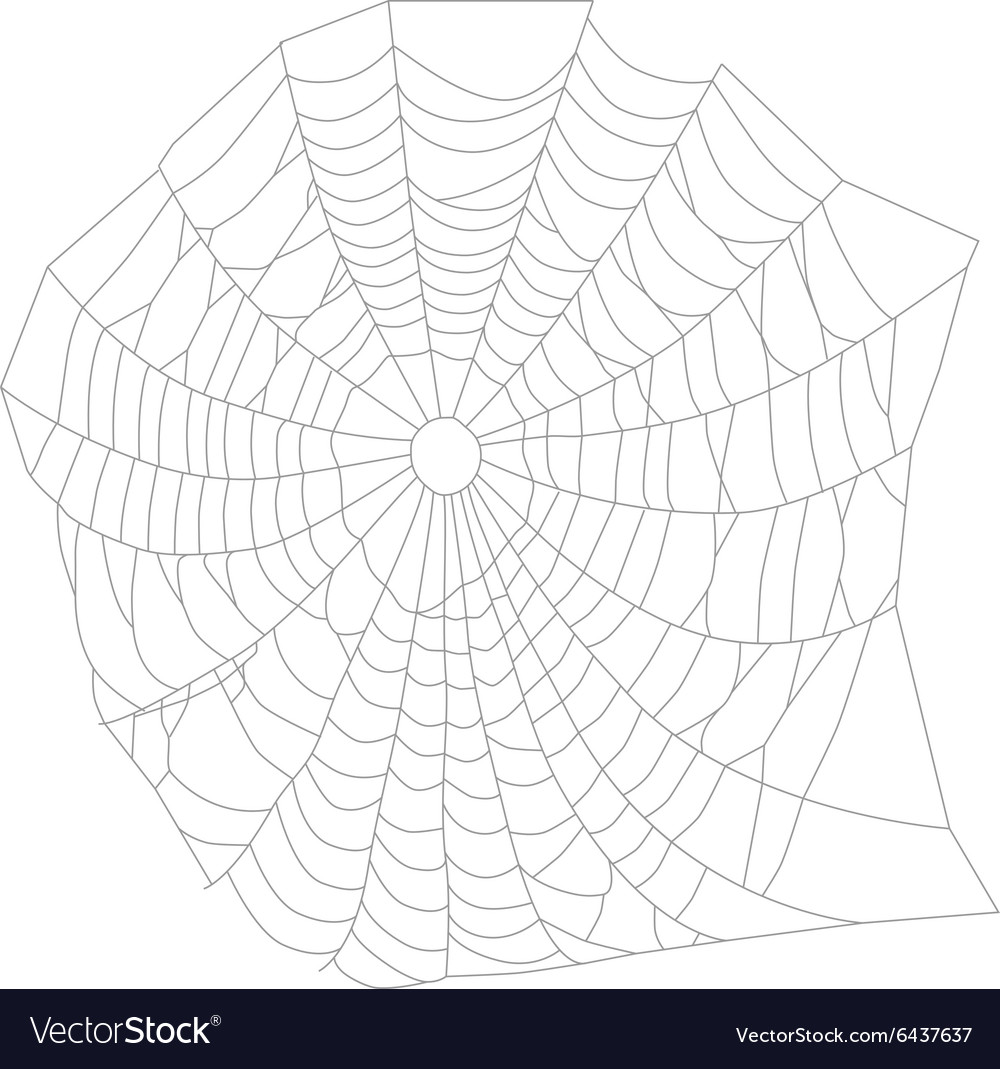 Spider web or net vector image