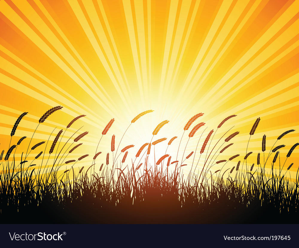 Wheat silhouette vector image