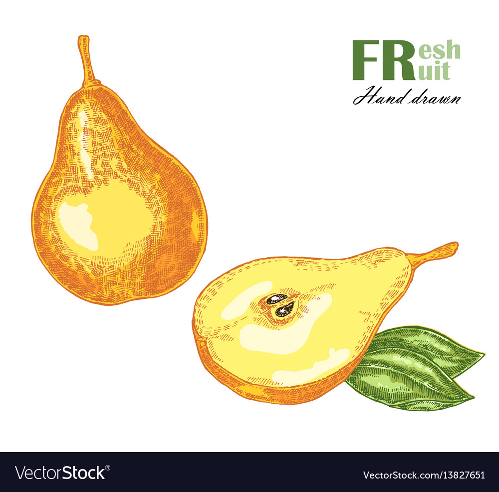 Ripe pear isolated on white background fruit vector image