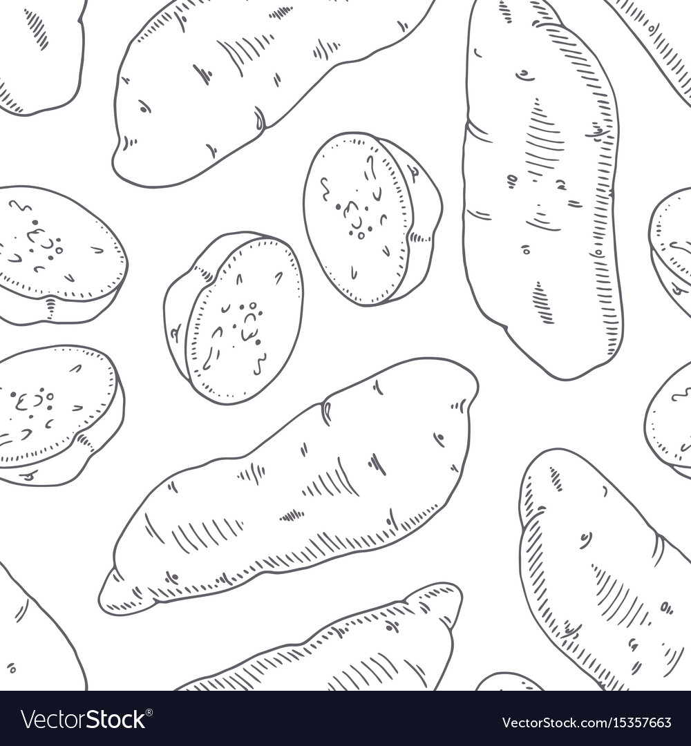 Hand drawn seamless pattern with sweet potato vector image