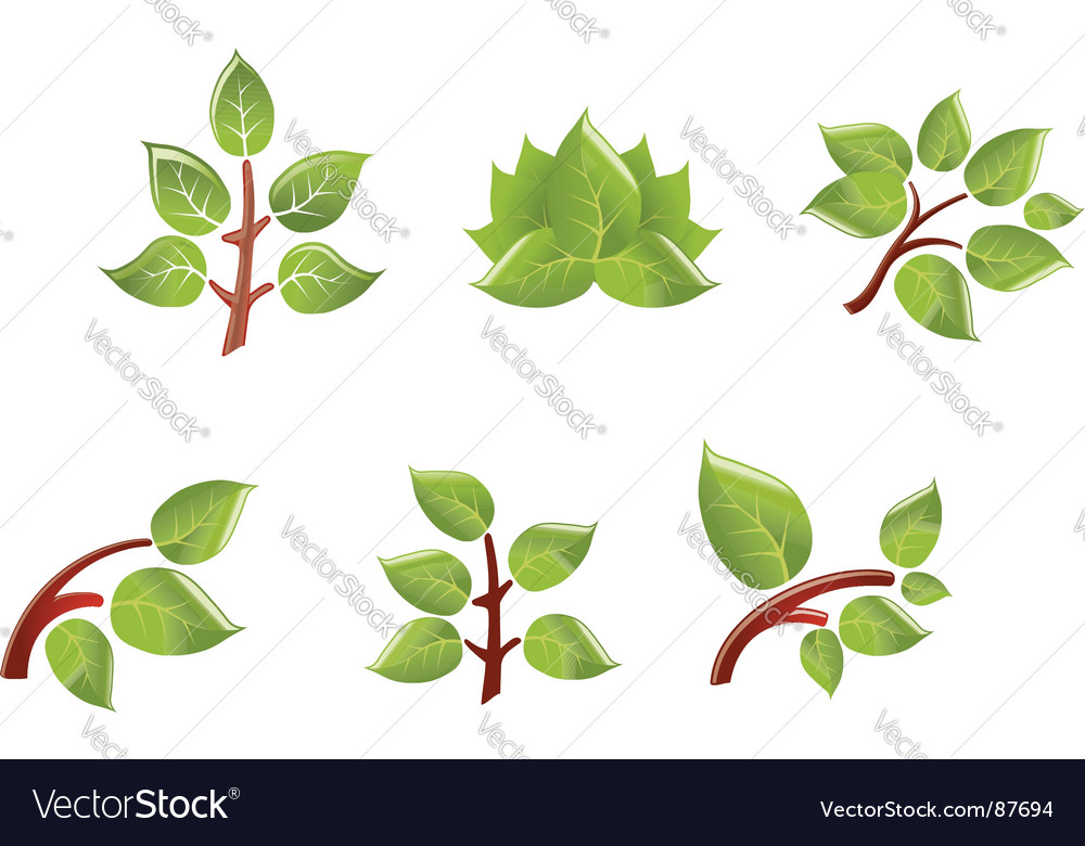 Leaves on branch Vector Image