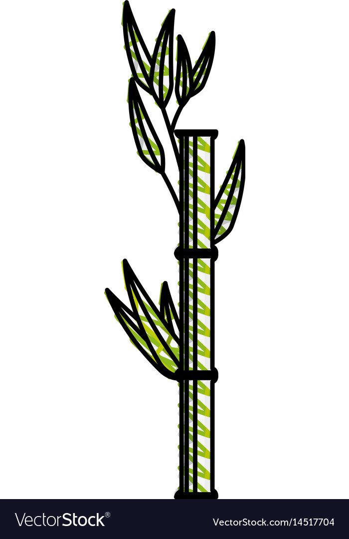 Bamboo japanese tree vector image