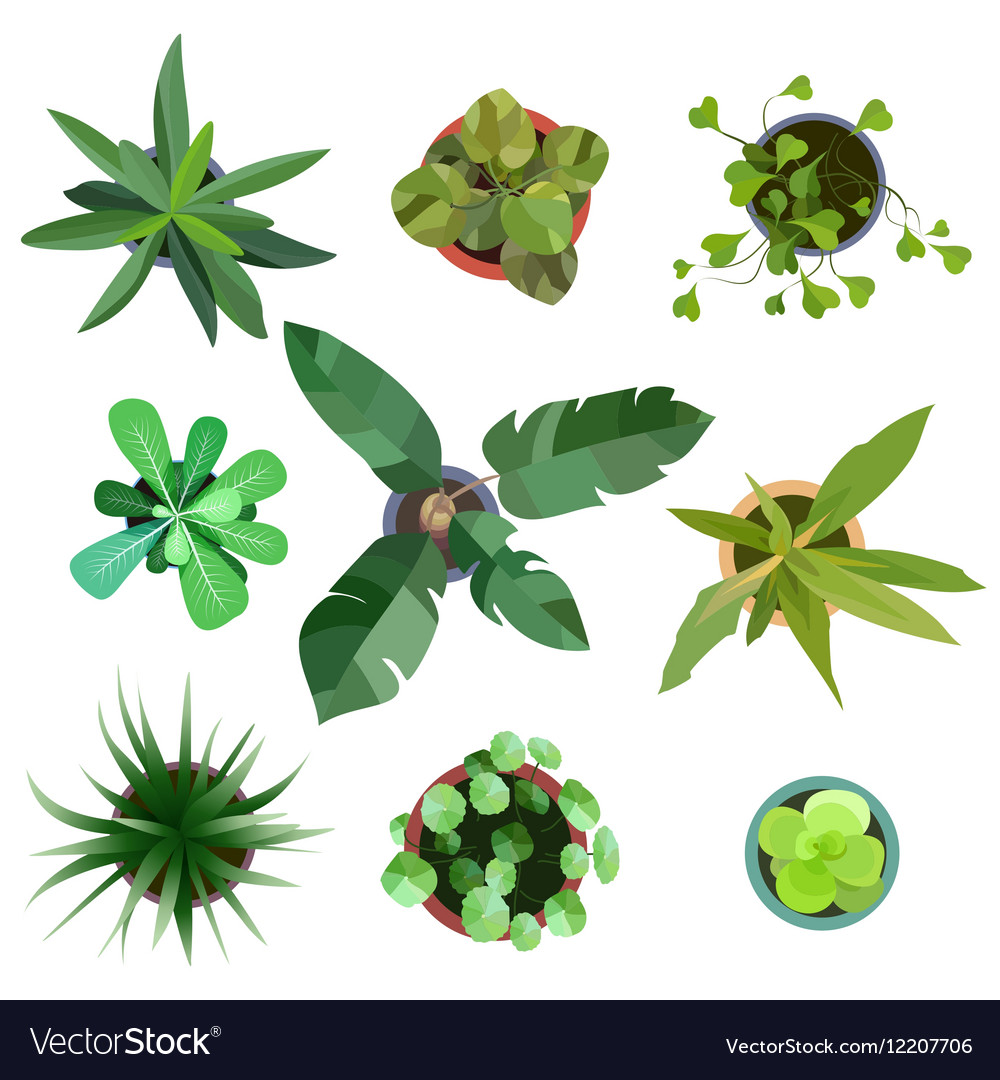 Top view plants Easy copy paste in your landscape Vector Image for Plant Top View Vector  70ref