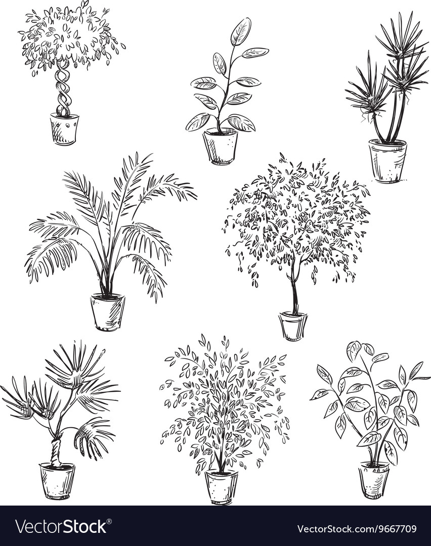 Set of home flowers in pots vector image