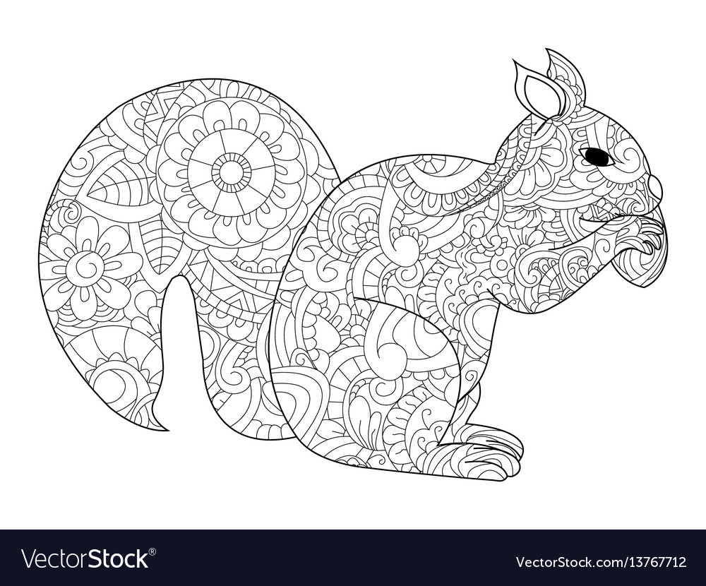 Squirrel with nut coloring for adults vector image