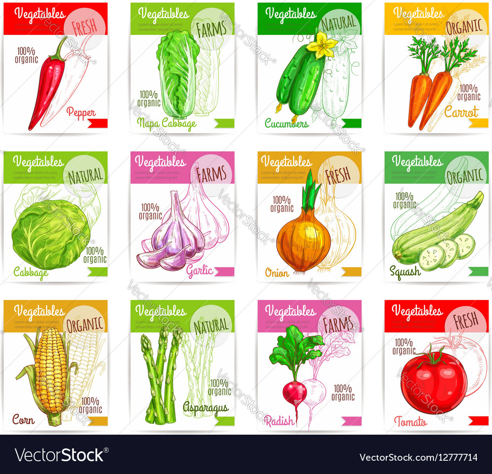 Vegetables square price tags set vector image