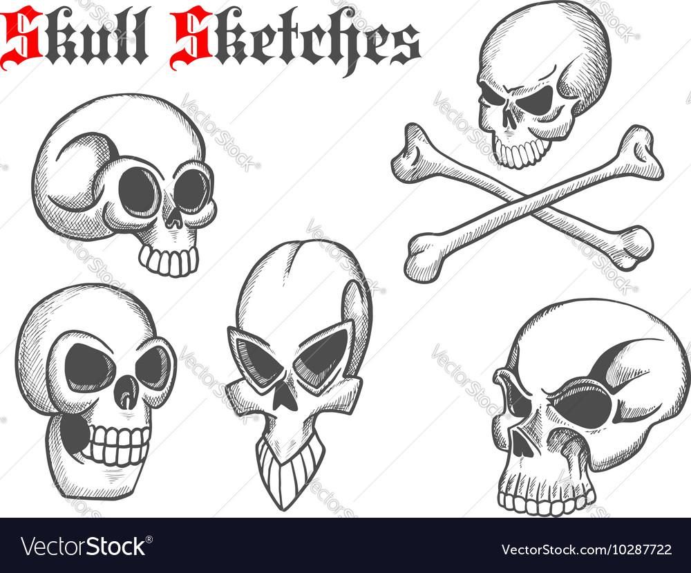 Skull artistic pencil sketch icons vector image