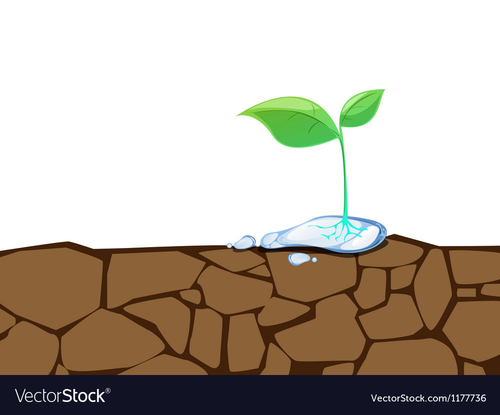 Crack Dirt Plant vector image