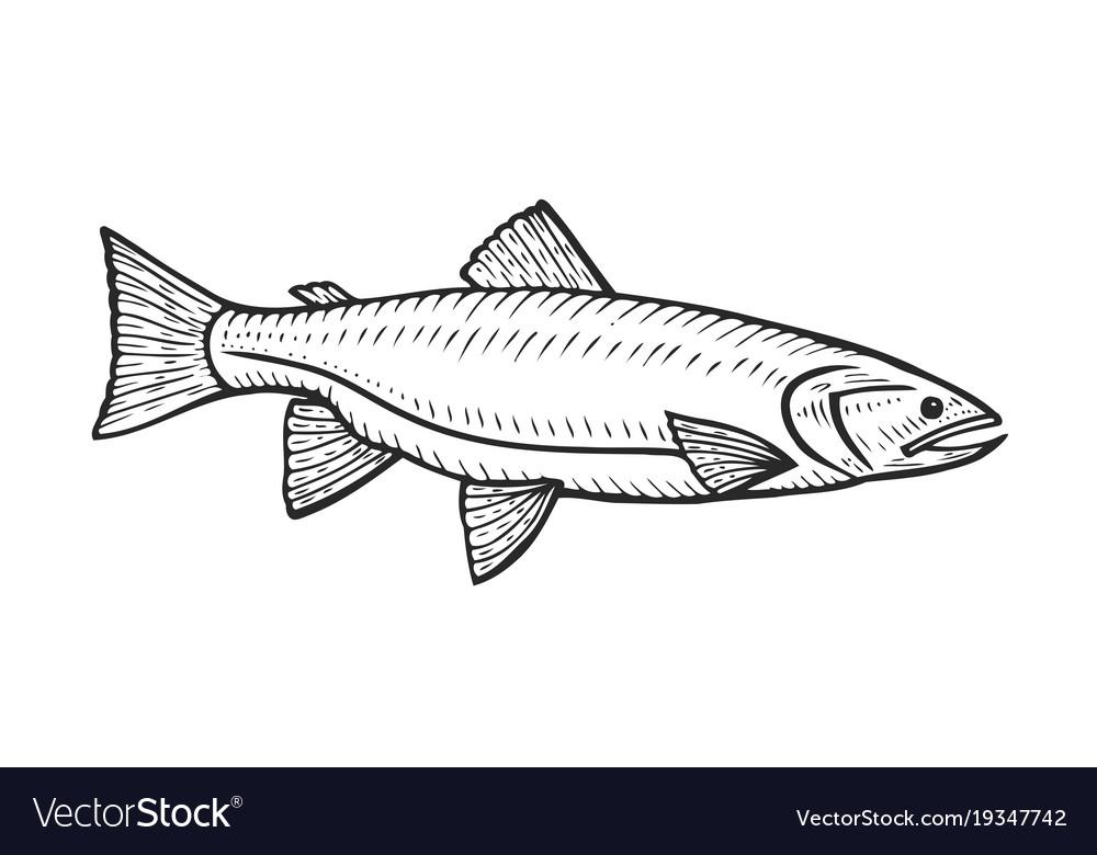Hand drawn roach fish vector image