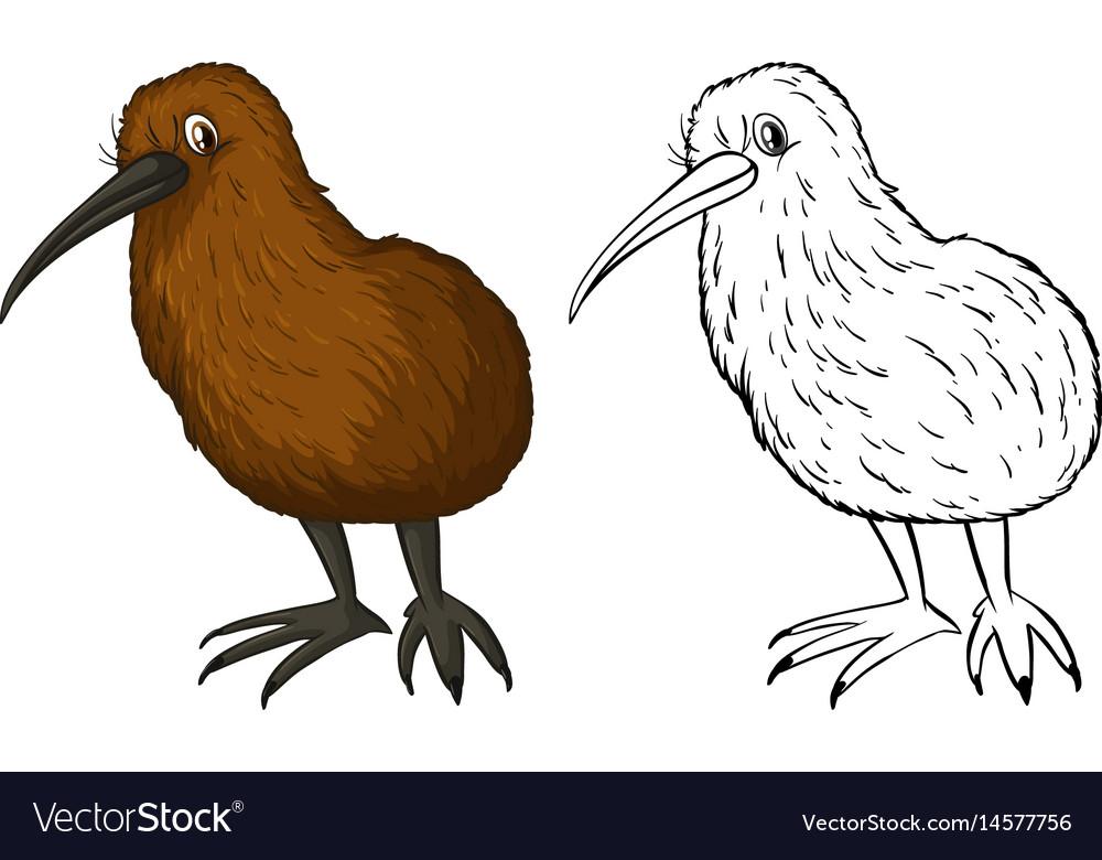 Doodle animal for kiwi bird vector image