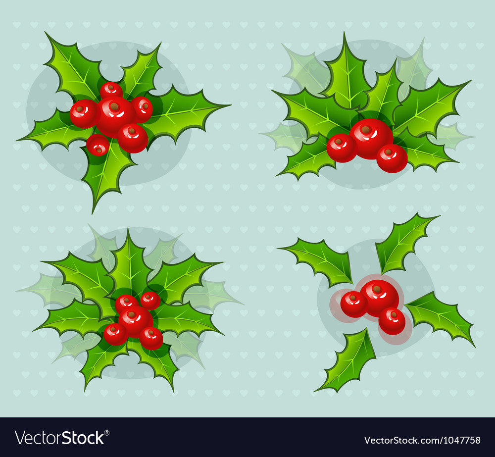 Holly-leaves vector image