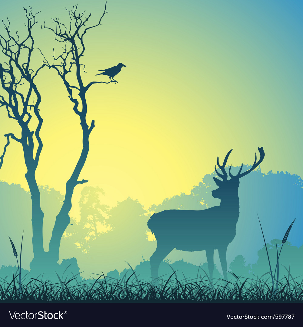 Male stag deer vector image