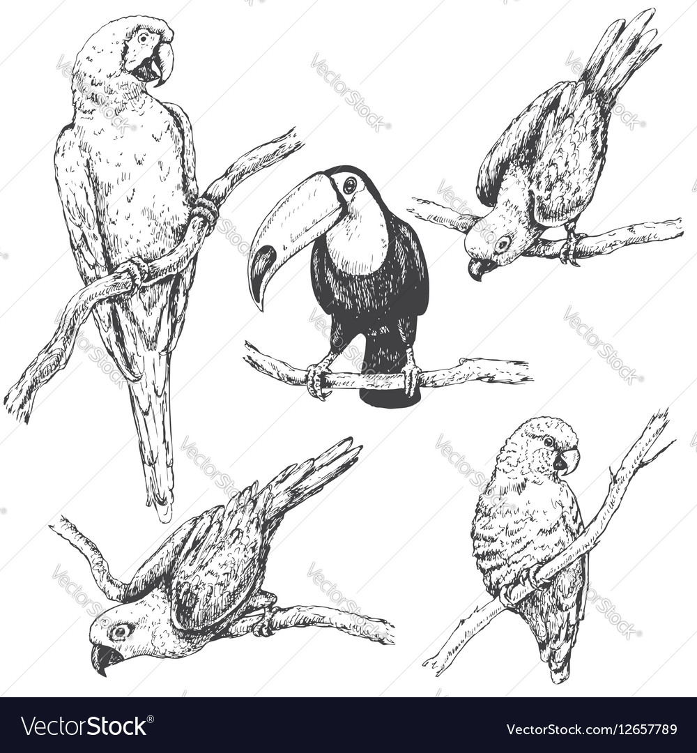 Doodle tropic birds vector image