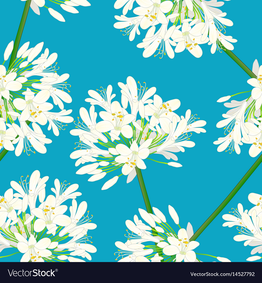 Snow white agapanthus on blue background vector image