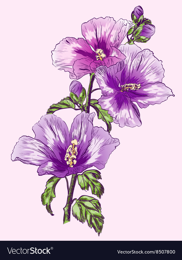 purple hibiscus revision Studyclix makes exam revision and study  here's two sample general vision and viewpoint essays i wrote based on how many miles to babylon and purple hibiscus,.