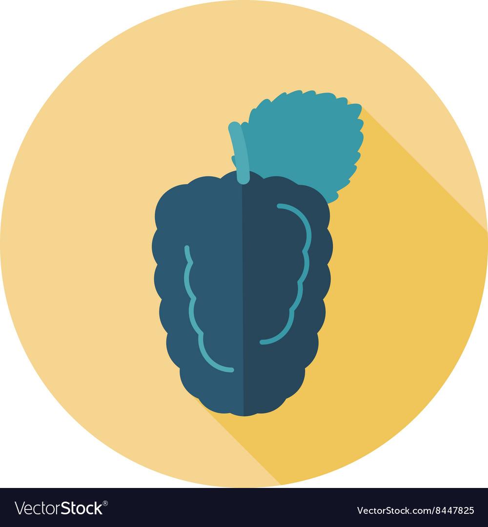 Blackberry bramble flat icon Berry fruit vector image
