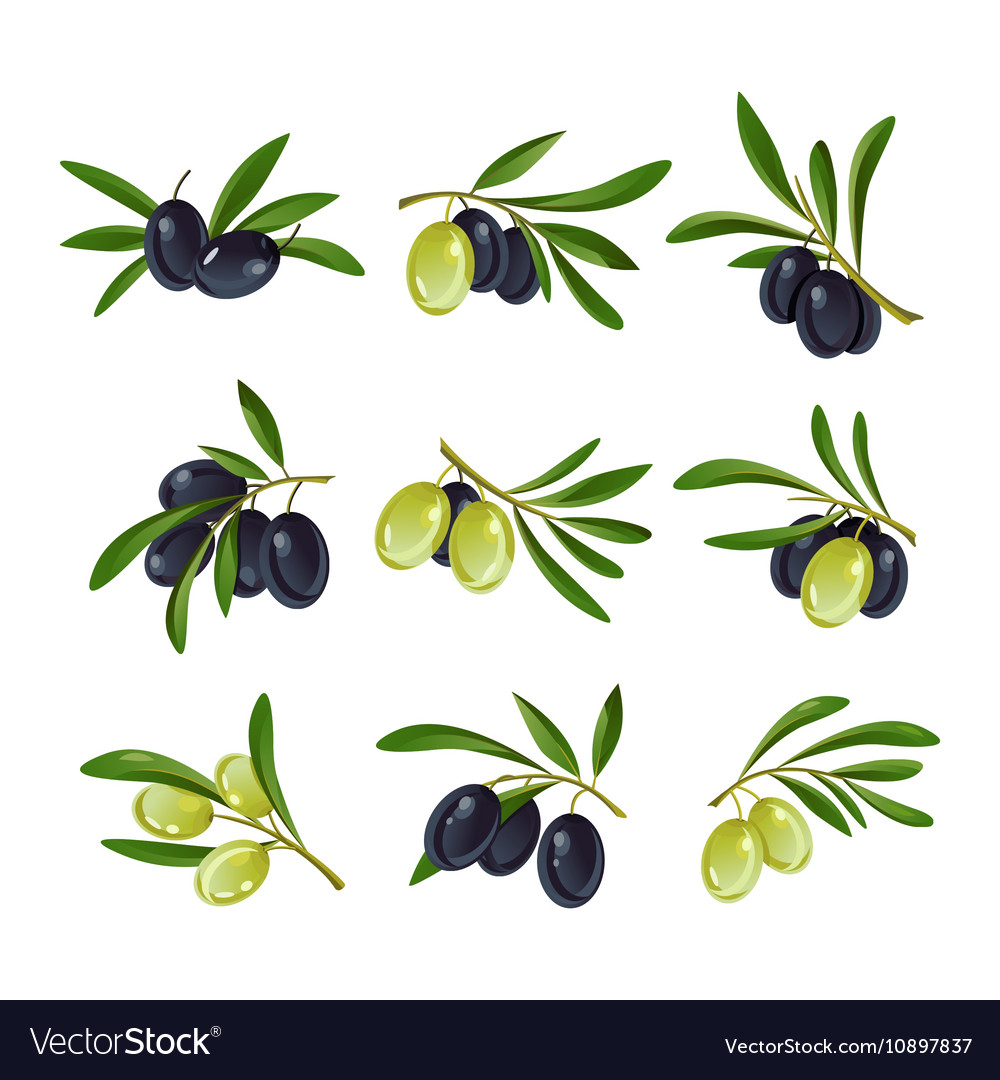Set of olive branches logotypes with leaves vector image