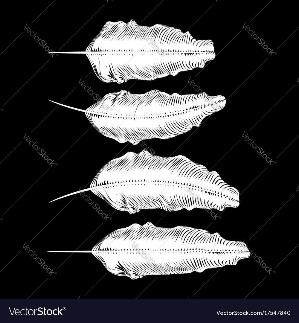 Different white feathers vector image