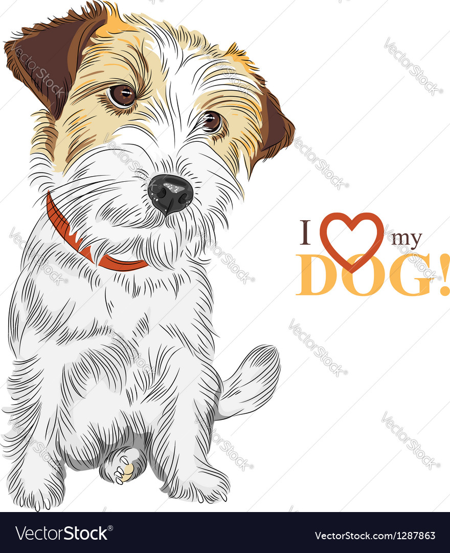 Wire-haired dog Jack Russell Terrier vector image